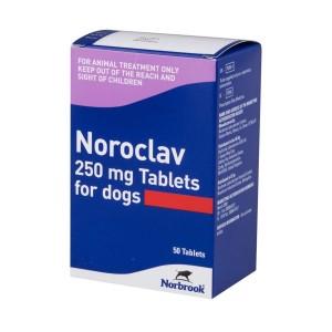 noroclav 250